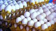 تخم مرغ ارزان شد